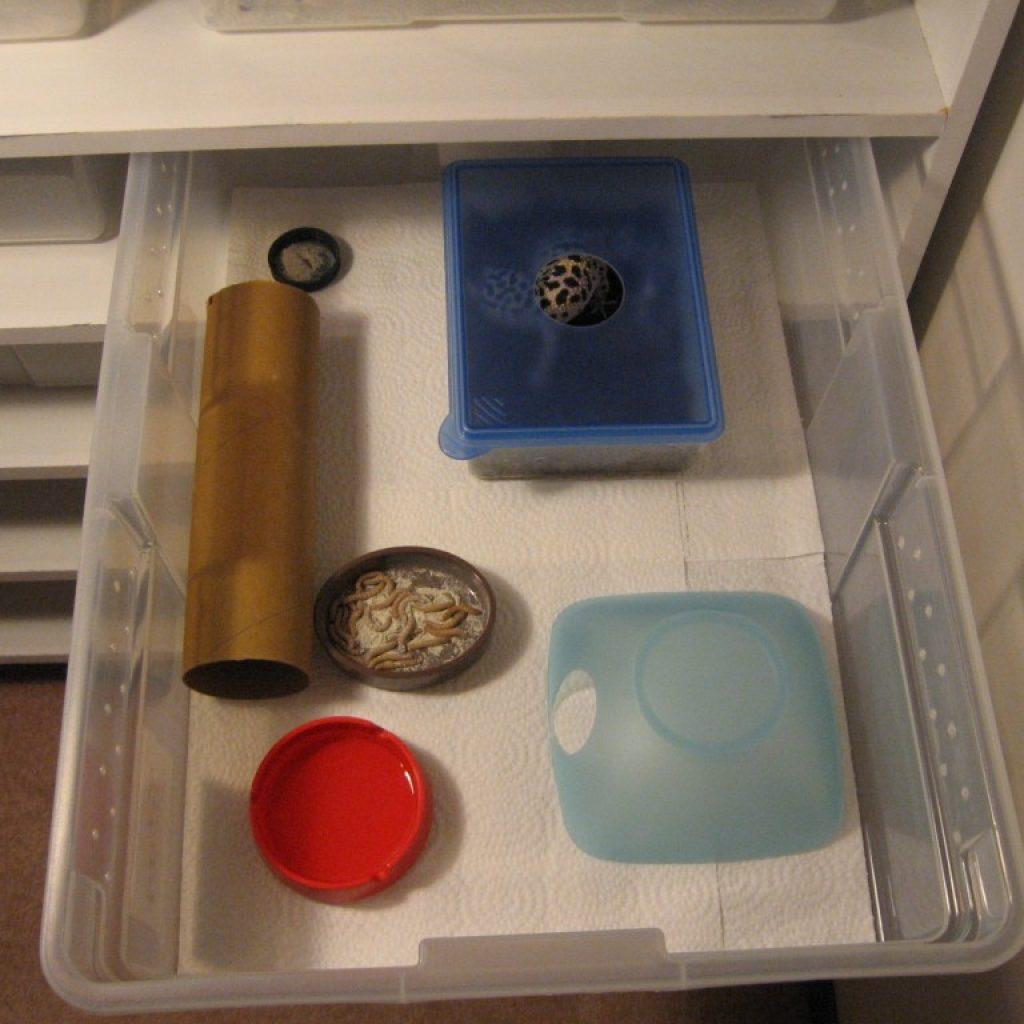 пластиковый контейнер для эублефара